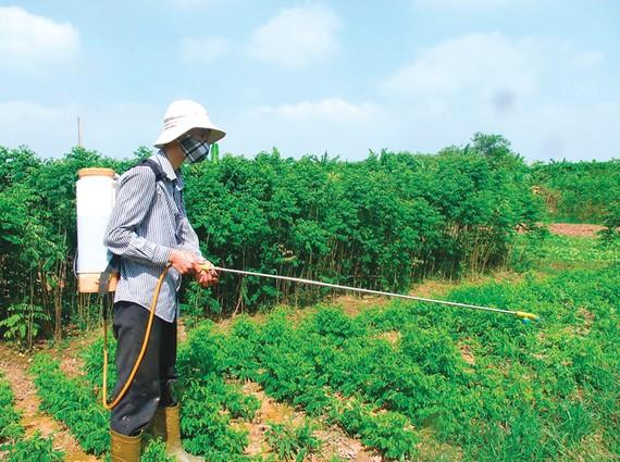 Nhiều nơi, nông dân vẫn sử dụng các loại thuốc diệt cỏ  đe dọa sức khỏe con người
