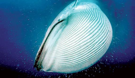 Đếm cá voi từ không gian