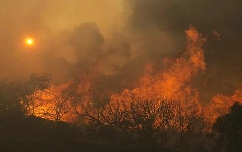 Ngọn lửa đã thiêu rụi 70.000 hec-ta rừng ở California, Mỹ. Ảnh: REUTERS