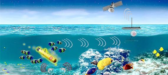 Dùng sinh vật biển phát hiện tàu ngầm