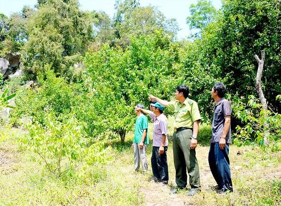 Lực lượng Kiểm lâm ở An Giang kiểm tra phòng chống cháy rừng mùa khô