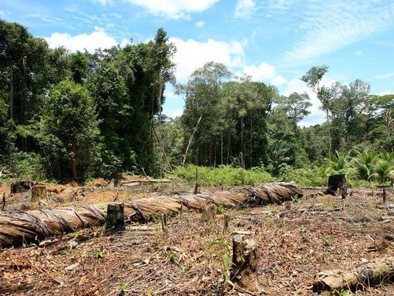 Rừng nhiệt đới trên Trái Đất giảm mạnh