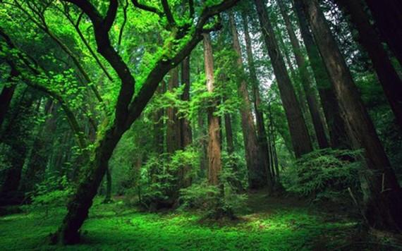 Diện tích rừng bị chặt phá tại Brazil lớn nhất thế giới