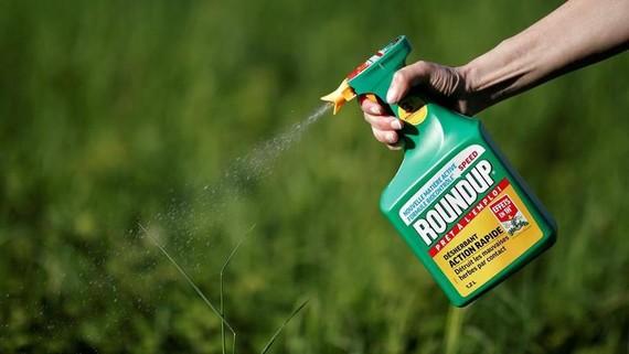 Thuốc diệt cỏ Roundup - Ảnh: Reuters