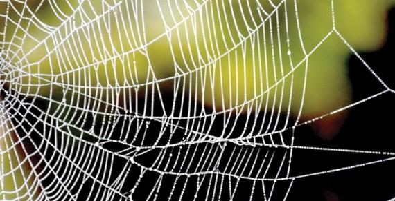 Áo giáp từ tơ nhện