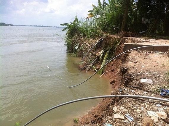 Sạt lở ăn sâu vào bờ sông Tiền qua xã Bình Thành, huyện Thanh Bình, tỉnh Đồng Tháp. Ảnh: An Minh