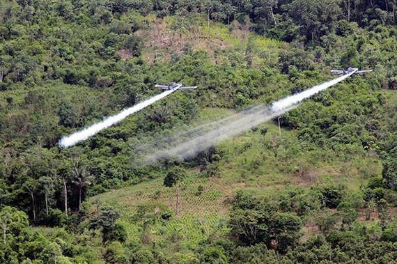 Colombia đẩy mạnh xóa sổ cây coca
