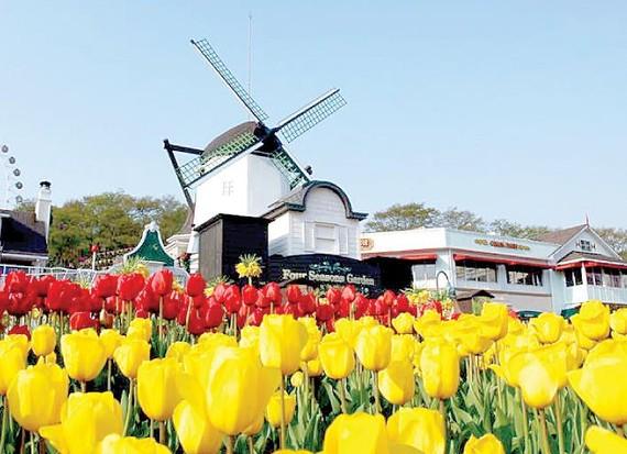 Lễ hội hoa tulip ở công viên Everland