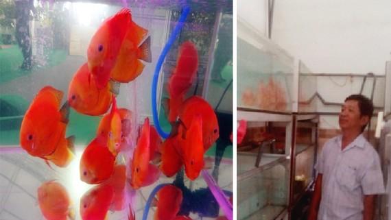 Phan Văn Lâm giới thiệu mô hình nuôi cá đĩa của mình
