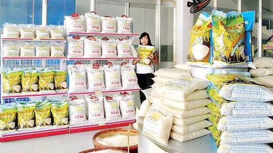 Japonica có thể trở thành gạo xuất khẩu chủ lực của Việt Nam
