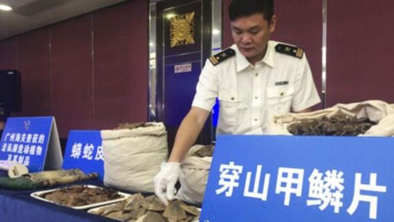 Hải quan Quảng Đông công bố vụ phát hiện hơn 7 tấn vảy tê tê buôn lậu vào Trung Quốc. ẢNH: People.com.cn