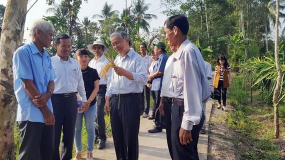Các chuyên gia đang hỗ trợ nông dân tỉnh Vĩnh Long sản xuất gạo đạt tiêu chuẩn organic