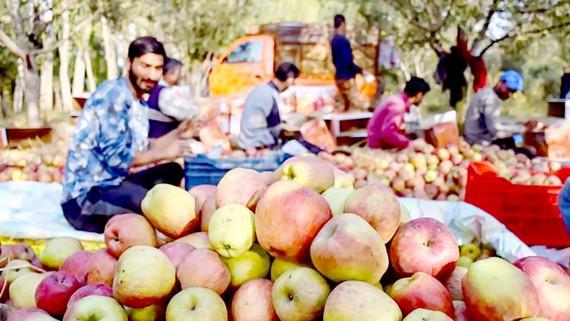 Chế độ ăn chống biến đổi khí hậu