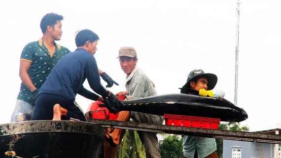 Thợ câu thôn Thiện Chánh 2 bán cá bò gù câu được ở vùng biển Hoàng Sa