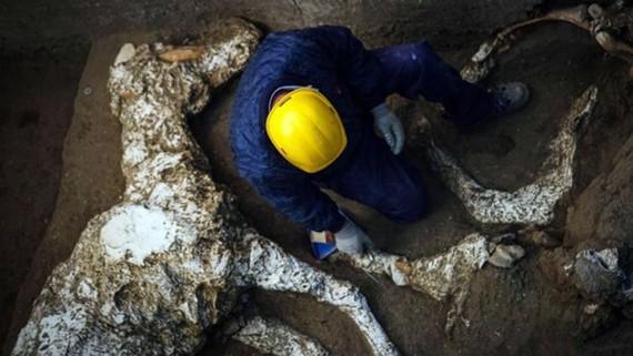 Khai quật xương ngựa gần 2.000 năm tuổi