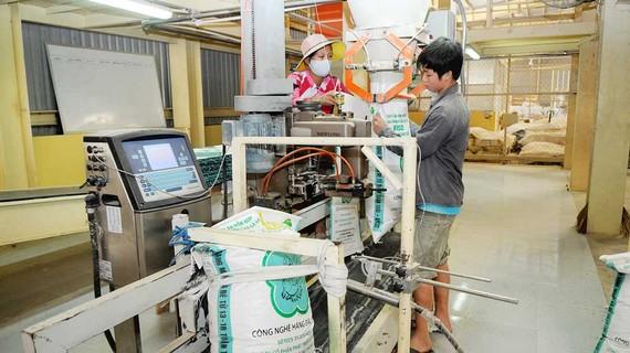 Sản xuất thức ăn gia súc phải thay 70% nguyên liệu bởi quy định cỏ Cirsium Arvense trong bột mì. Ảnh: THÀNH TRÍ