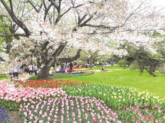 Công viên Showa Kinen tràn ngập sắc hoa