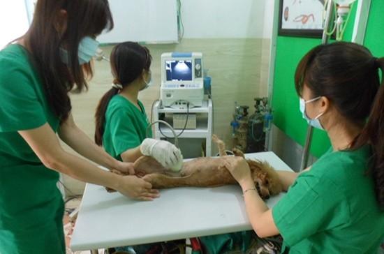 Dịch vụ chăm sóc cho thú cưng ở thời điểm này đang hút khách.