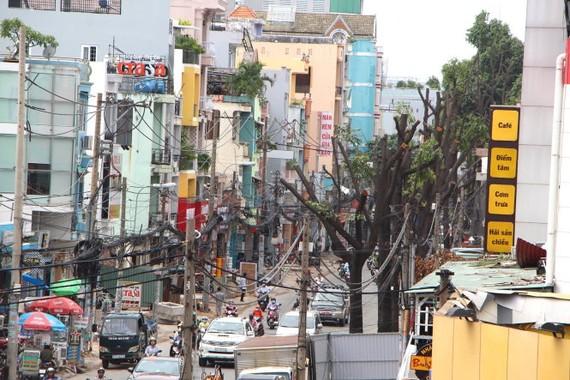 Hàng cây trên đường Phạm Ngũ Lão đã được cắt tán, cành để bứng gốc dời đi nơi khác