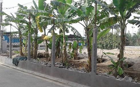 Hà Nội: Dân đổ đất san nền lấn chiếm đất nông nghiệp