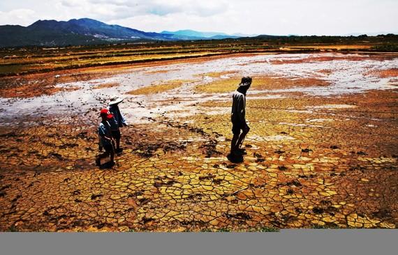 Biến đổi khí hậu ảnh hưởng nghiêm trọng đến Đồng bằng sông Cửu Long. (Nguồn ảnh: TTXVN)