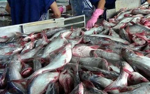 Hoa Kỳ chuẩn bị thanh tra Chương trình kiểm soát cá da trơn Việt Nam