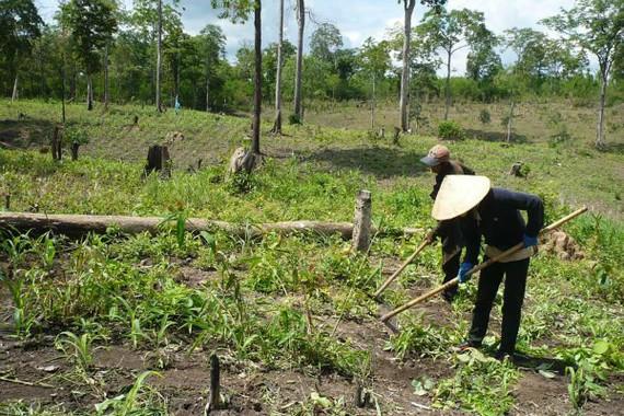 Các nông, lâm trường đang quản lý 9.192.221ha đất