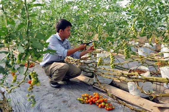 Thủ tướng yêu cầu gỡ vướng sản xuất nông nghiệp công nghệ cao