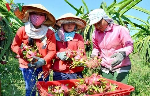 """Xuất khẩu nông sản: Đâu là """"át chủ bài""""?"""
