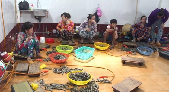 Một vụ bơm tạp chất vào tôm tại Bạc Liêu bị phát hiện, bắt giữ. Ảnh: TẤN THÁI
