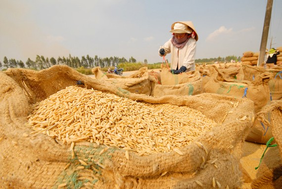 Việt Nam ký hợp đồng xuất khẩu gạo giá trị lớn với Philippines