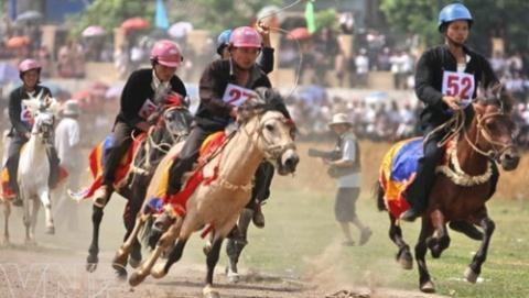 Hà Nội sẽ đầu tư xây dựng trường đua ngựa