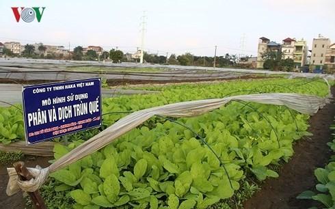 Nông nghiệp hữu cơ rất cần những nguồn gen quý.