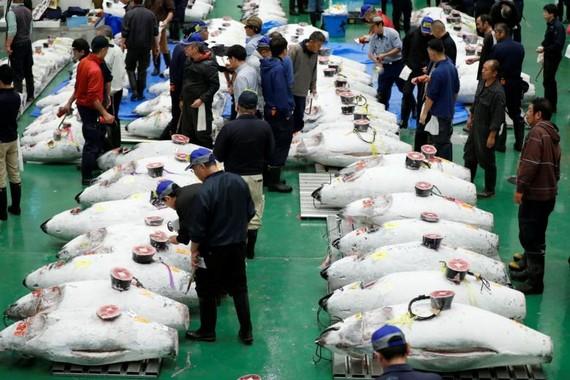 5 tỷ USD xây chợ đấu giá cá Toyosu, Tokyo