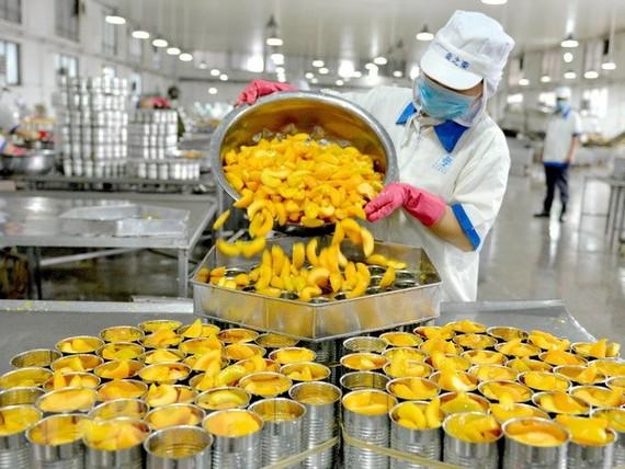 Công nhân đóng đồ hộp xuất khẩu tại nhà máy ở huyện Hạ Ấp, tỉnh Hà Nam, Trung Quốc. (Ảnh: AFP/TTXVN)