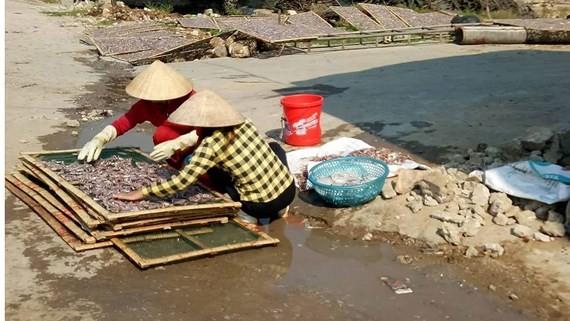 Thu mua và chế biến hải sản để nước thải chảy ra đường, gây ô nhiễm môi trường quanh cảng cá Quỳnh Lập