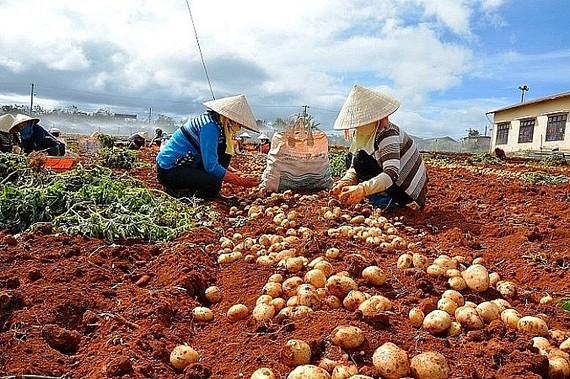 """Rà soát hàng hóa, ngăn chặn """"nông sản ngoại đội lốt Việt"""""""