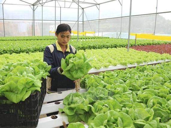 Đưa Việt Nam vào tốp 15 nước nông nghiệp phát triển nhất