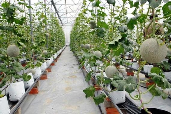 TPHCM đẩy mạnh đầu vào-ra sản phẩm nông nghiệp