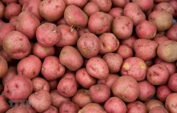 Khoai tây được bày bán tại một khu chợ ở Washington, DC, Mỹ. (Nguồn: AFP/TTXVN)