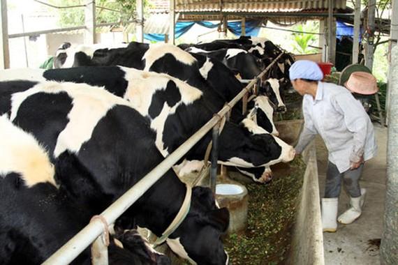TPHCM: giá trị sản xuất nông nghiệp 2 tháng ước đạt hơn 2000 tỷ đồng