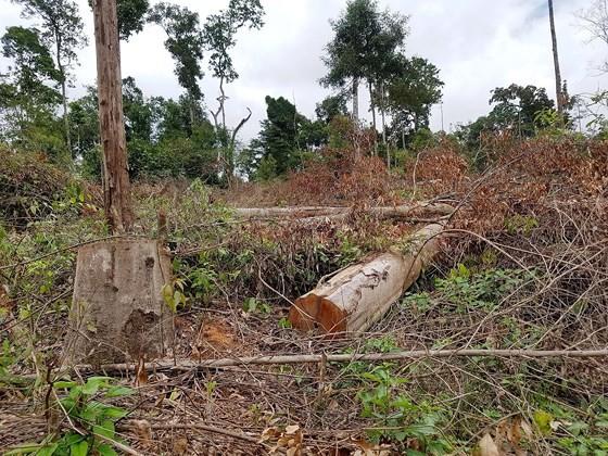 Nhiều nơi đua nhau tàn phá rừng