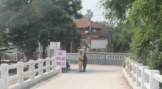 Các chốt kiểm dịch đã được UBND huyện Hải Lăng thành lập tại các xã giáp ranh với huyện Phong Điền (Thừa Thiên-Huế)
