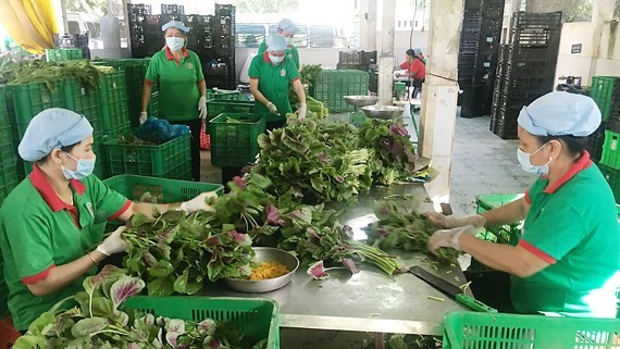 TPHCM: 50% hộ nông dân tham gia sản xuất, kinh doanh HTX