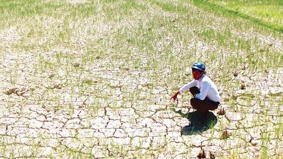 Đồng ruộng khô nứt nẻ ở xã Hương Thủy, huyện Hương Khê, tỉnh Hà Tĩnh. Ảnh: DƯƠNG QUANG