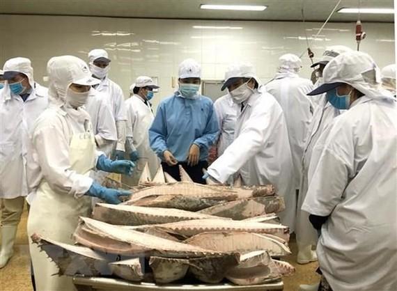 Đoàn Ủy ban Nghề cá của Nghị viện châu Âu kiểm tra tại Công ty Cổ phần thủy sản Bình Định. (Ảnh: Nguyên Linh/TTXVN)