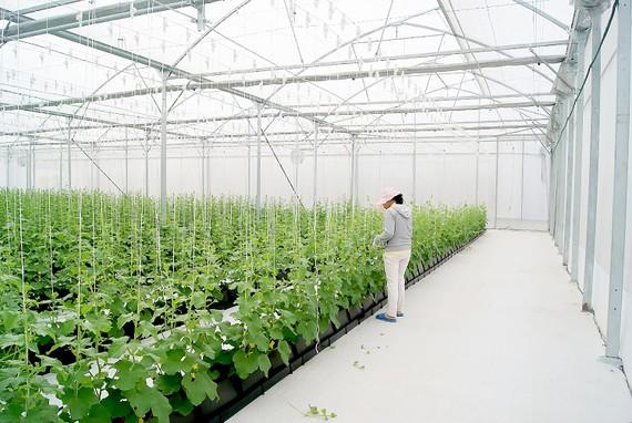 Thúc đẩy doanh nghiệp đầu tư vào nông nghiệp