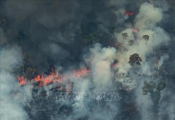 Thêm hàng trăm đám cháy mới ở rừng Amazon