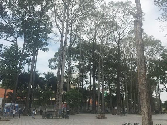 文郎公園內的多棵大樹逐漸枯萎。