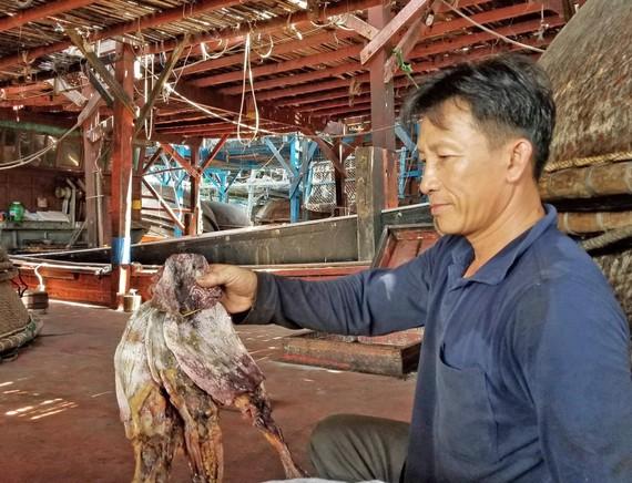 Hơn 1.000 tấn mực tồn của Quảng Nam đã được bán